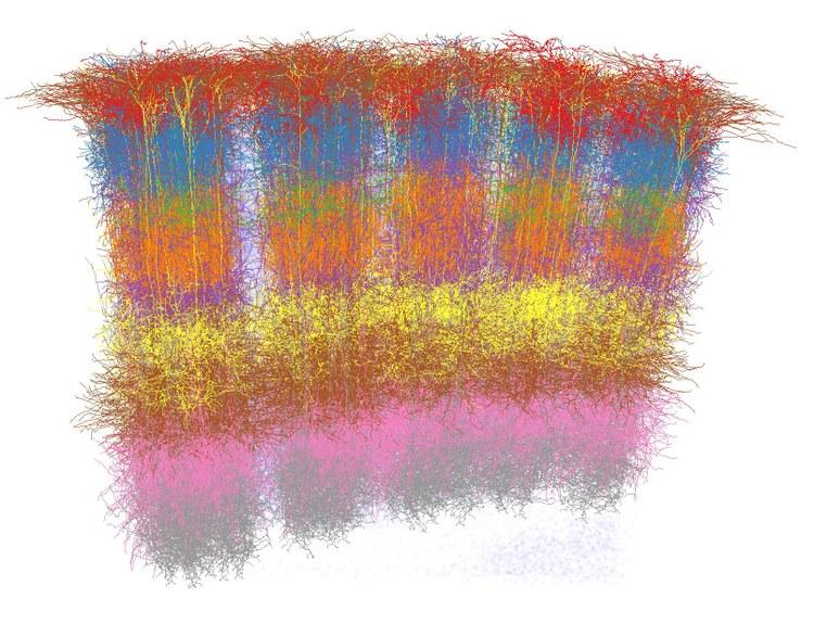 organization structure simulation Organization structure dean nancy fahrenwald director of nursing student services todd stricherz  simulation technician aaron tonsager ug program assistant i.
